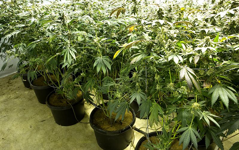 Arlington's First Medical Marijuana Dispensary Opens