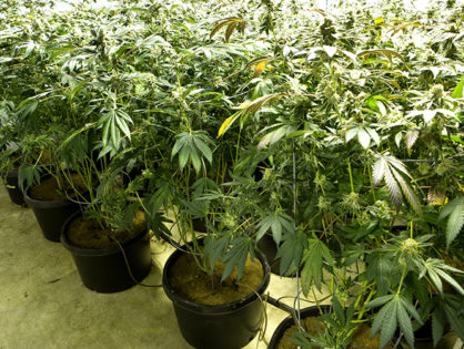 Marijuana contracts are under investigation in Salem by the U.S. Attorney's office