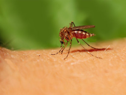 ALERT: State health officials in Miami-Dade County warning locals of dengue fever a mosquito-borne illness