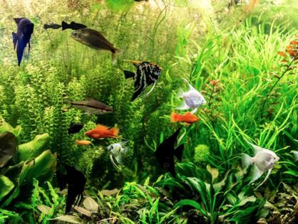 San Diego's Aquarium is getting new visitors