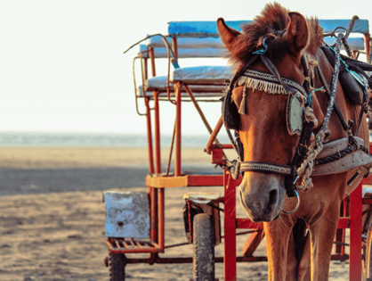Chicago to ban horse-drawn carriages after hundreds of violations