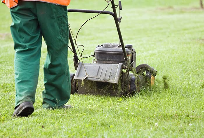 local-records-office-moving-lawn-grass- (1)